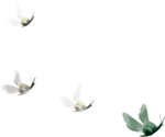 ldavi-paintersfaeries-flyingsnails.png
