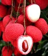 фрукт личи_frukt lichi