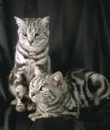 """Схема вышивки  """"Кошки """": таблица цветов."""