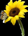 цветы-(272).png