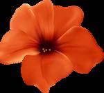 цветы-(277).png
