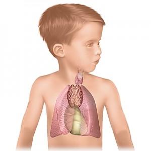 тимус-ребёнка-300x300.jpg