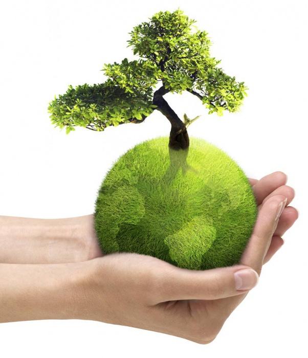 Всемирный день окружающей среды и День эколога