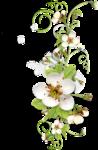 Весенний сад (70).jpg