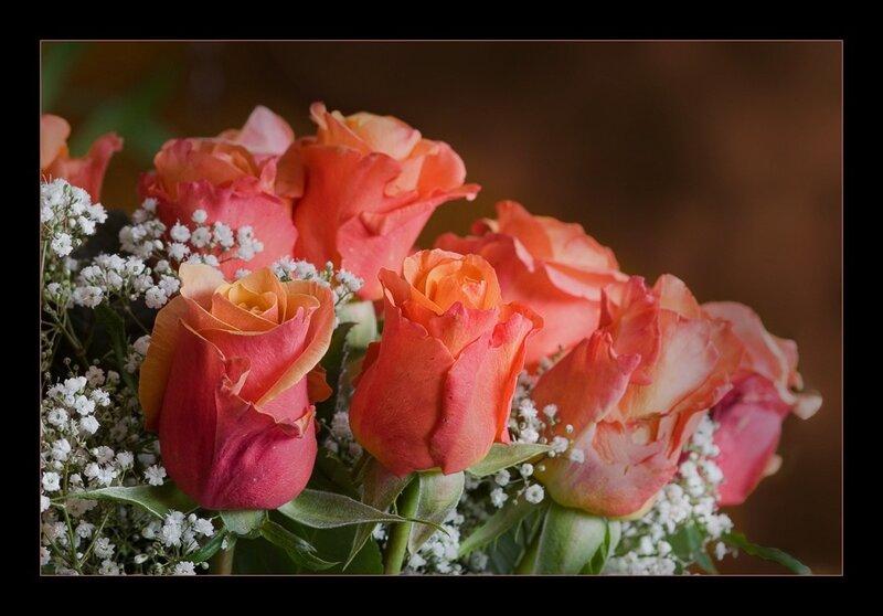 нашу открытки чудесные розы рабочий стол пополняется