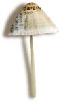 catherinedesigns_R-C23_Mushroom5_sh.png