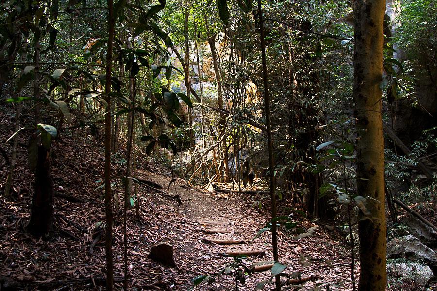 Завез бабу в лес фото 65-739