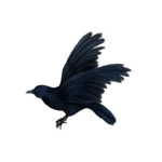 SD GOTH SOUL CROW 1.png