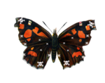 TTL-butterfly 1.png
