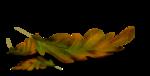 осенние тропинки (55)
