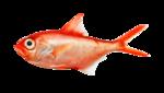 StarLightDesigns_OceanDreams_elements (43).png