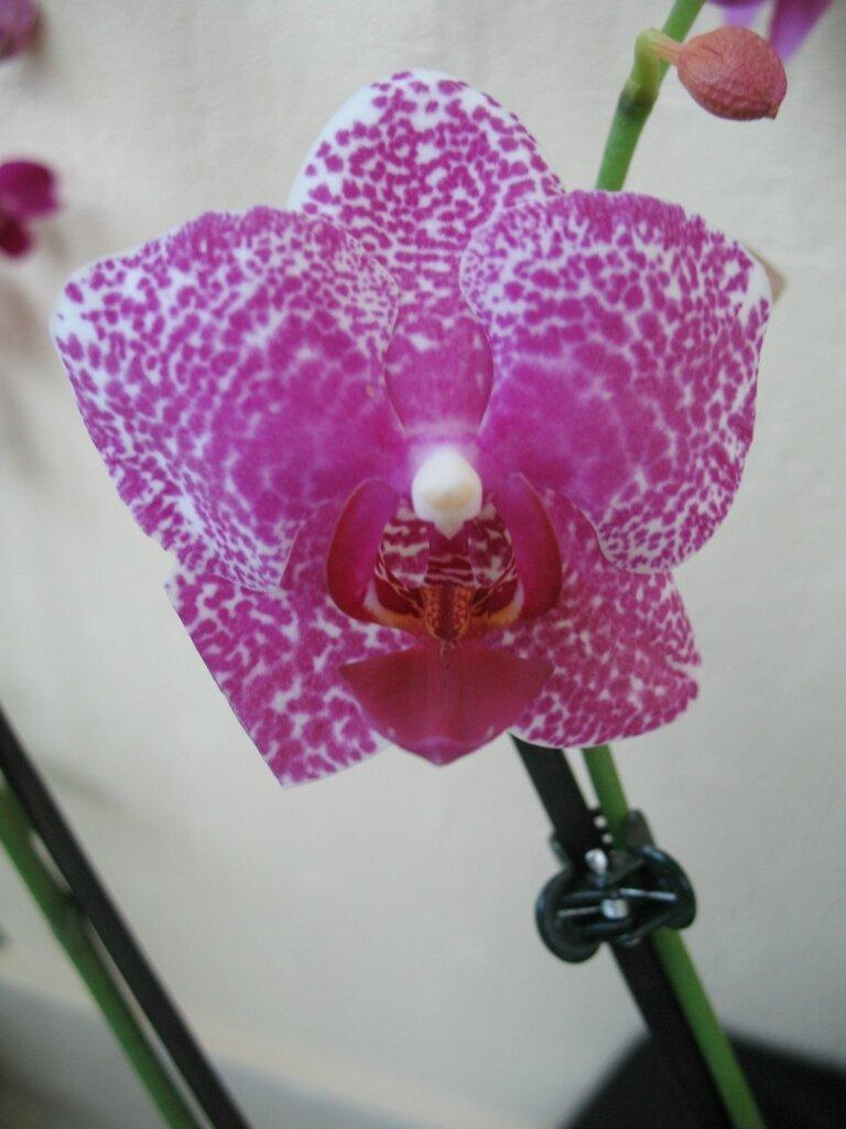 Почему орхидея закрыла цветы