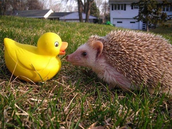 Забавные животные...:) http://img-fotki.yandex.ru/get/4710/130422193.31/0_684da_a5cf8735_orig