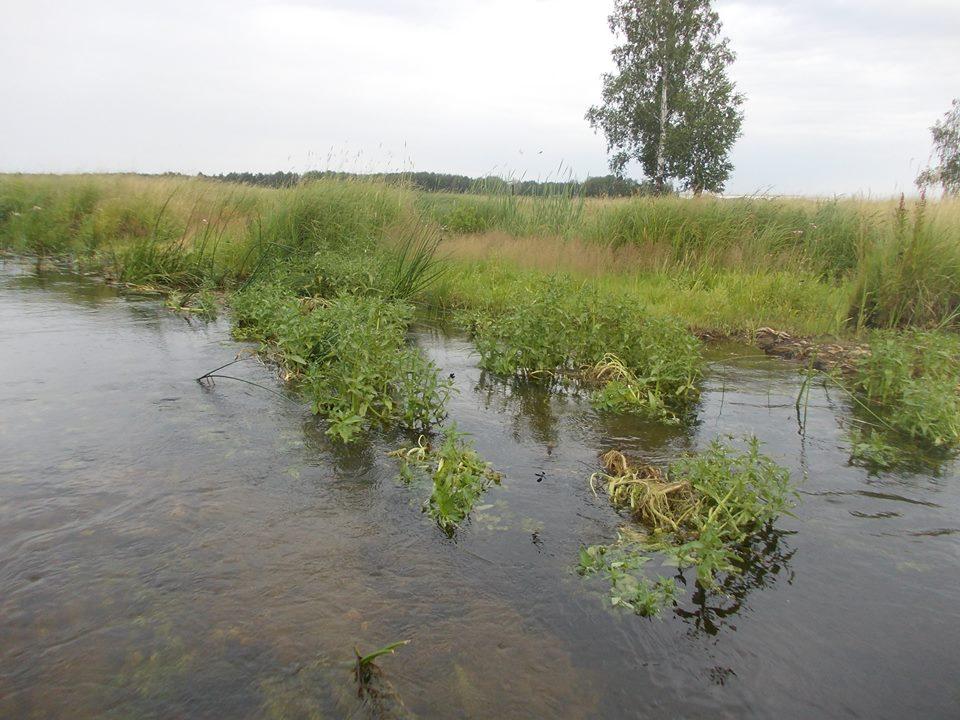 Река Коелга (13.07.2015)