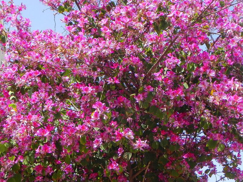 Весеннее цветение деревьев.