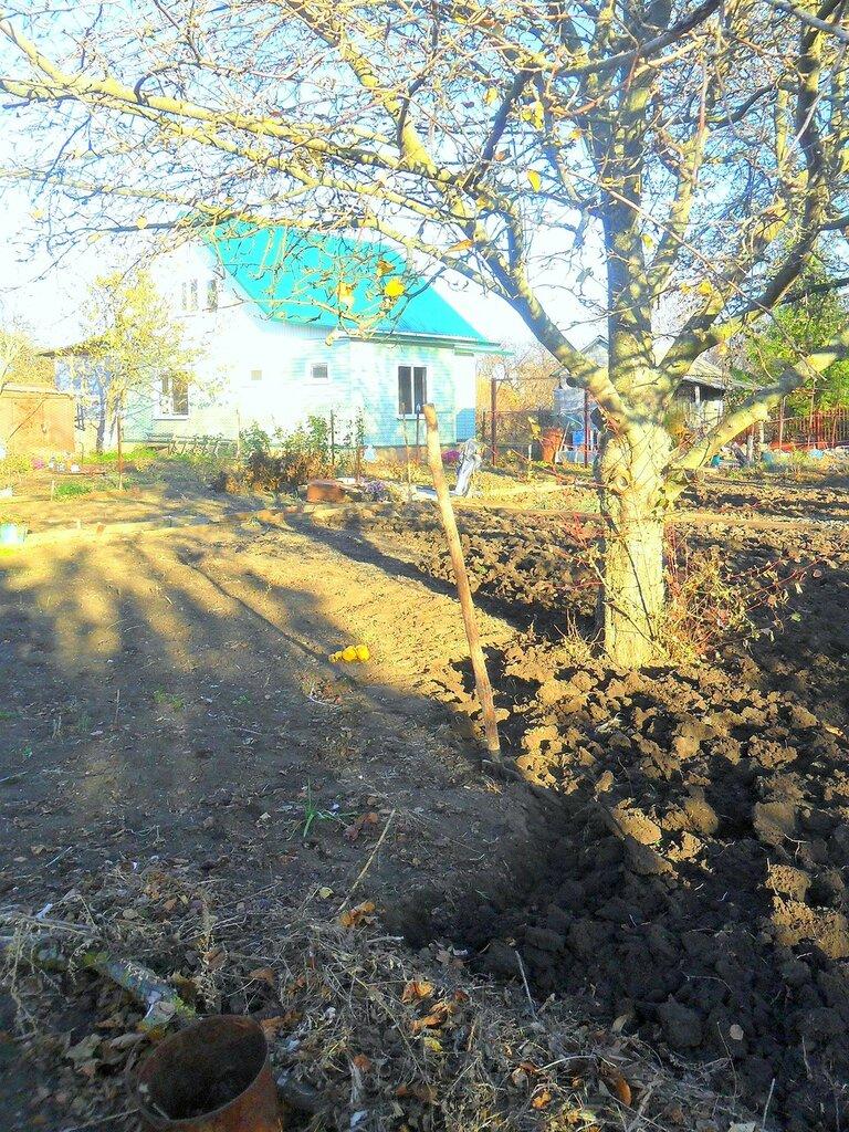 Обработка земли ... SAM_4438.JPG