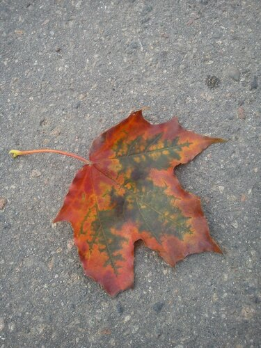 осень-художница