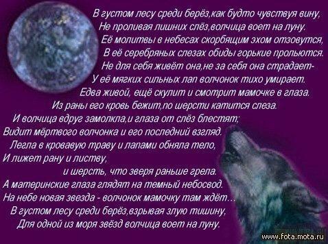 Стихи и песни про волков в картинках 0_6f445_eae8843_XL