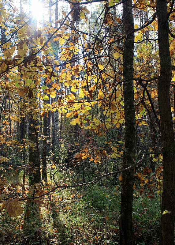 Осенние кружева (8 октября 2011)