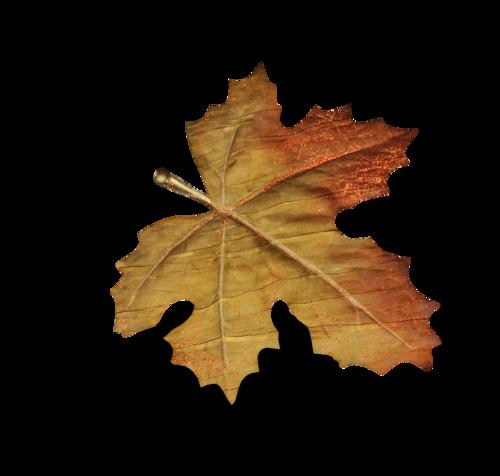 волшебная осень (172)