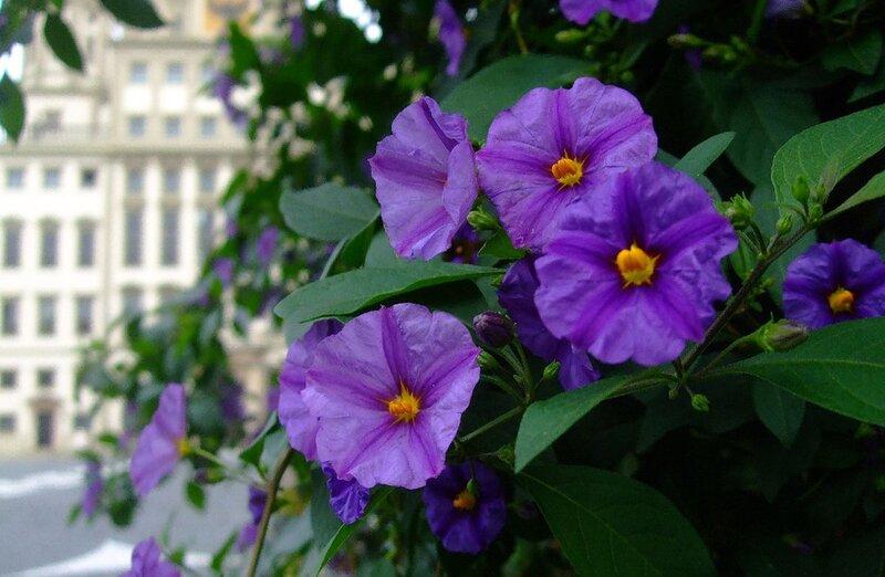 Ратушная площадь. цветы на фоне Rathaus (Ратуши).