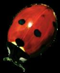 Secret Garden Ladybug.png
