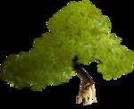 Secret Garden Tree1.png