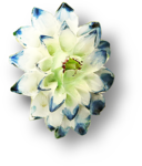 ldavi-heartwindow-porcelainflower10.png