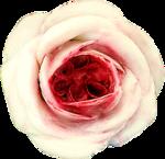 ldavi-heartwindow-porcelainflower25.png