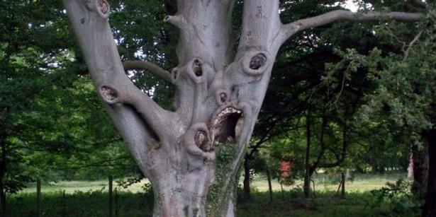 10 самых страшных деревьев на земле