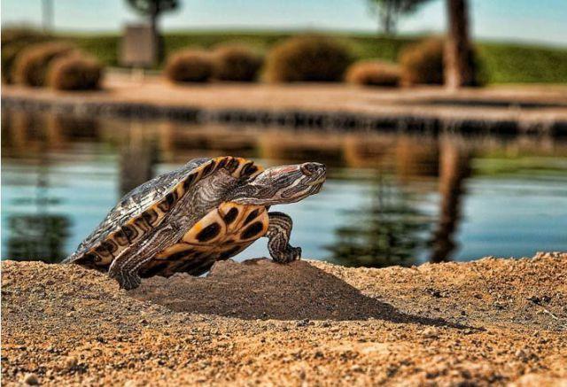 Забавные животные...:) http://img-fotki.yandex.ru/get/4711/130422193.31/0_684d7_c2c778a4_orig