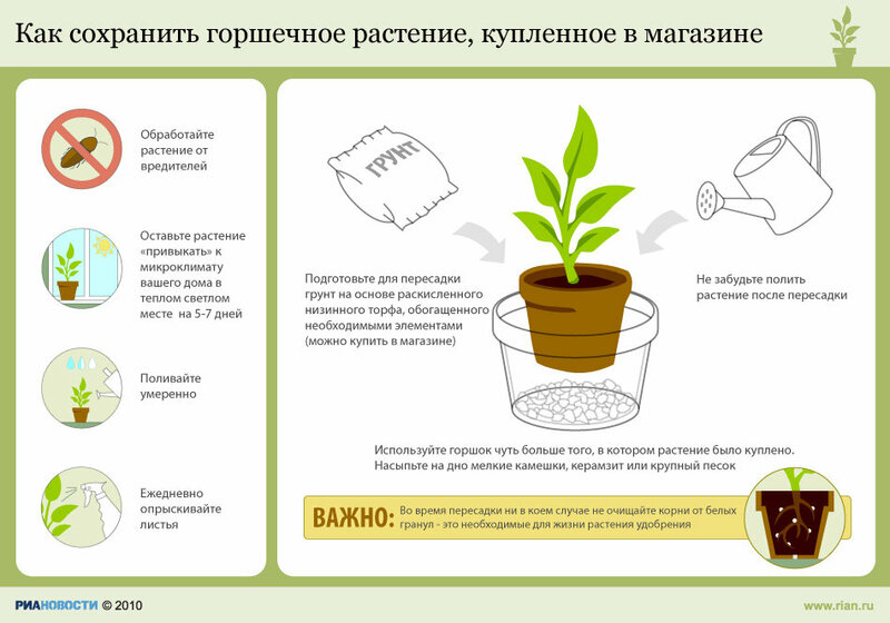 Памятка уход за комнатными растениями 71