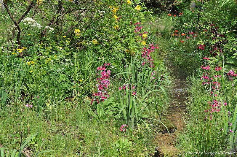 The Laurent-Perrier Chatsworth Garden (17).JPG