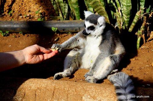 тенерифе, канарские острова, парк обезьян