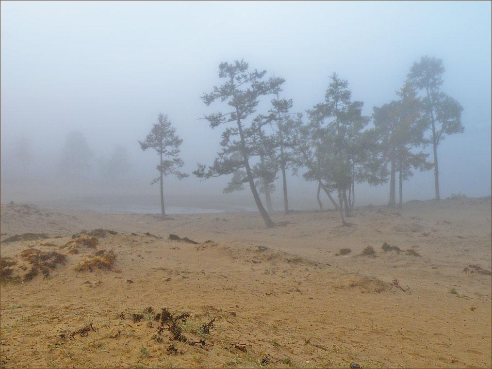 Деревья на песке