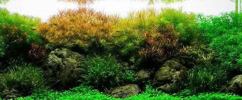 Голландский аквариум - феерия растительности и буйство красок.