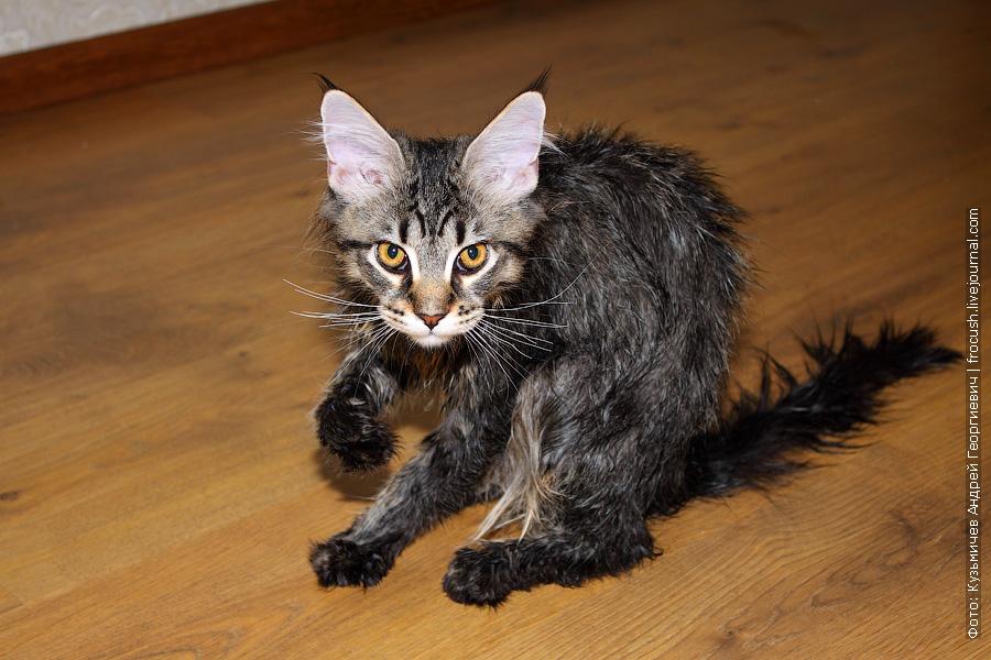 котенок после душа