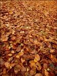 leaf11.jpg