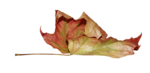 natali_design_dream_leaf2.png