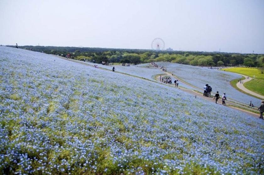 Живописный японский парк Хитати Кайхин 0 1422cb 4497a5af orig