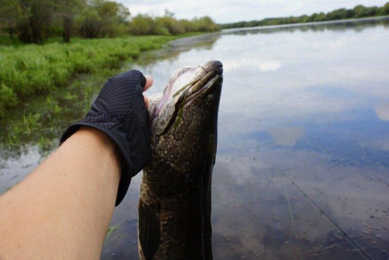 форум змееголов рыбалка