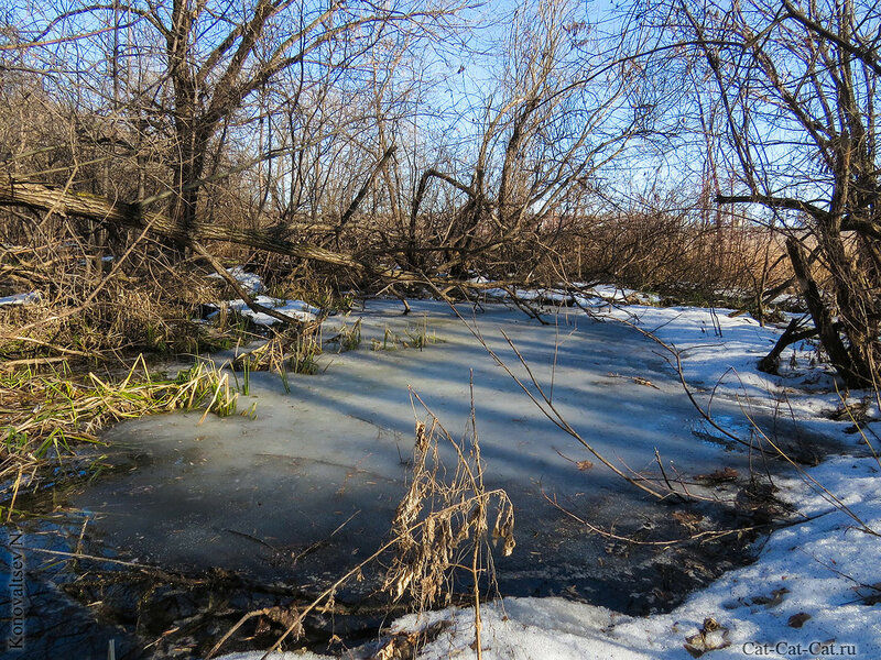 Таяние льда на Свияге