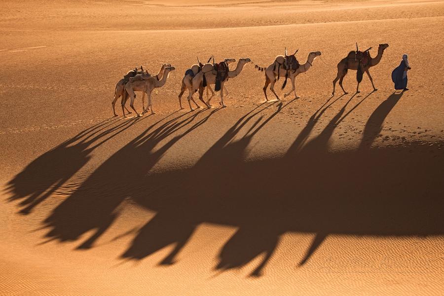 Мир в объективе.Фотограф Дмитрий Архипов