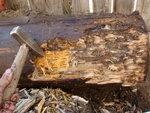 Столб лиственницы 40 лет под землёй.