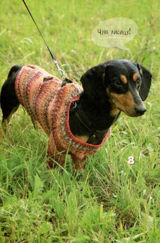 Вязанная одежда для кошек и собак.  Прочитать целикомВ.