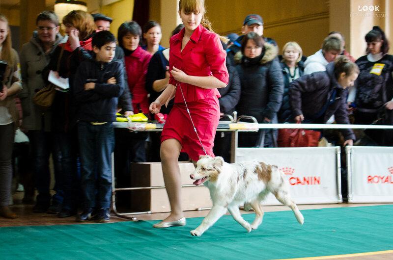 Выставочные успехи наших собак - 5 - Страница 27 0_a8814_5934ee7_XL