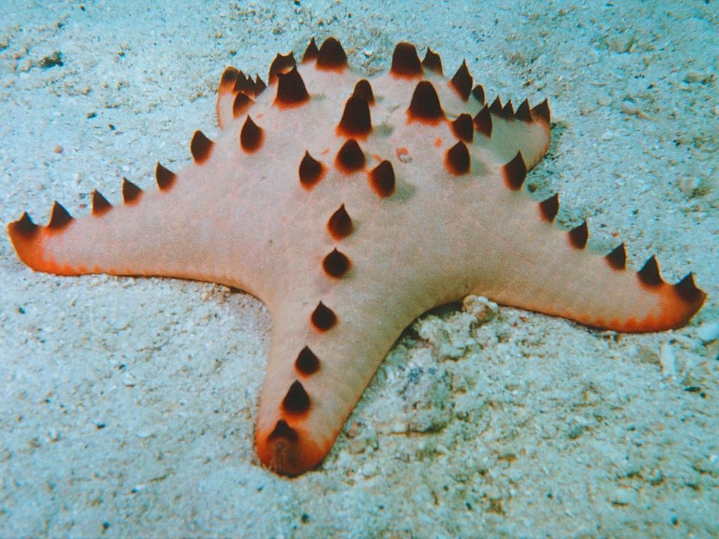 Такие разные морские звезды