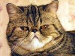 """Международная выставка кошек """"Helloween в стиле Cats"""" г. Барнаул 29-30 октября 2011 г."""