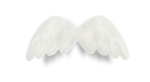 natali_design_dream_wings2-sh.png