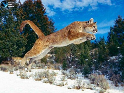 Природы удивительные животные на